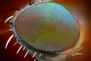 eye under a microscope, fly eye under a microscope photo, human eye under a microscope